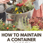 tips for effective container gardening - container flowers