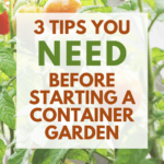tips for effective container gardening - Pinterest pin with container grown tomatoes