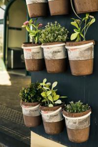 tips for effective container gardening - herbs hung in containers